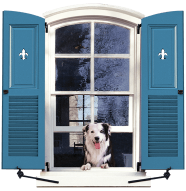 dog in window with blue Timberlane Shutters